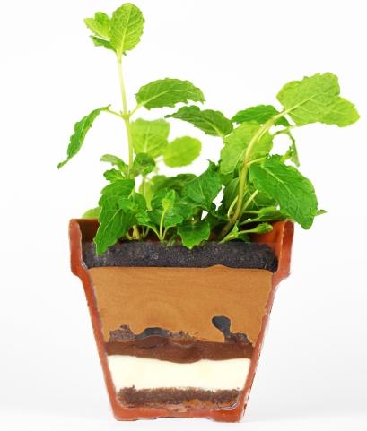 dessert in a plantpot